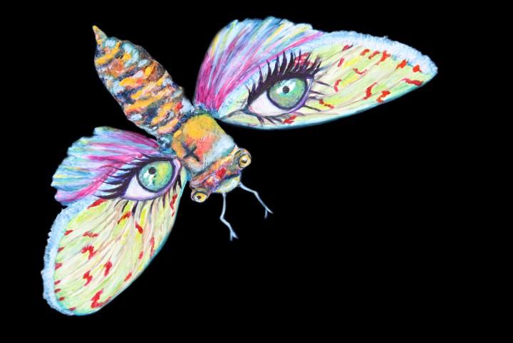 Perfecte Stilte, Thomas Verbogt, boek, vlinder, Valerie, de nacht, nacht vlinder, ogen